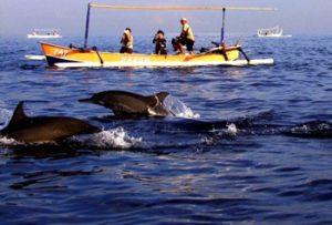 Dolphin Tour Lovina 2