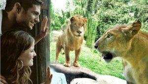 bali zoo 1