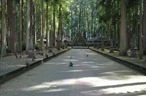 Sangeh Monkey Forest 1