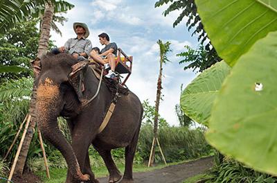 bali-zoo-elephant-ride